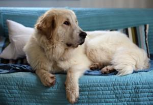 Hundeportal Sofaterroristen